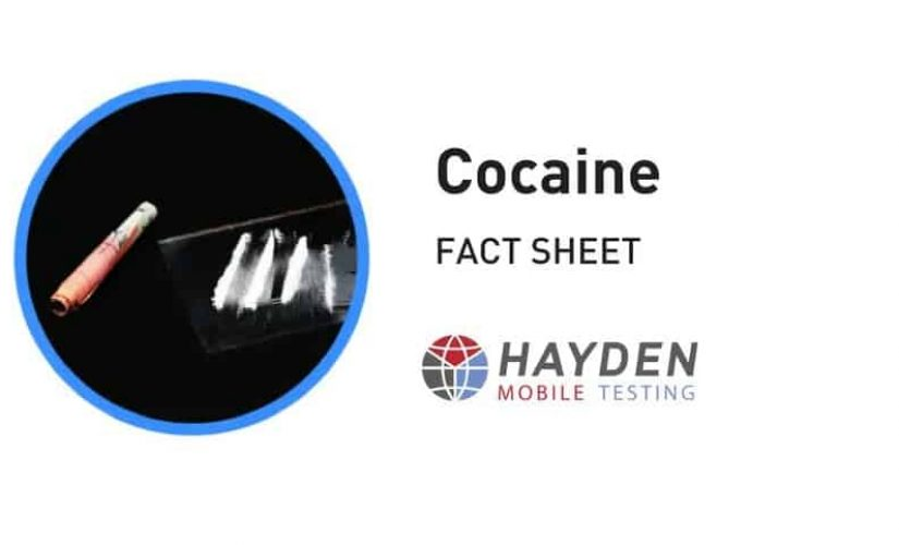 Cocaine Fact Sheet - Workplace Testing Service - Hayden Health & Safety
