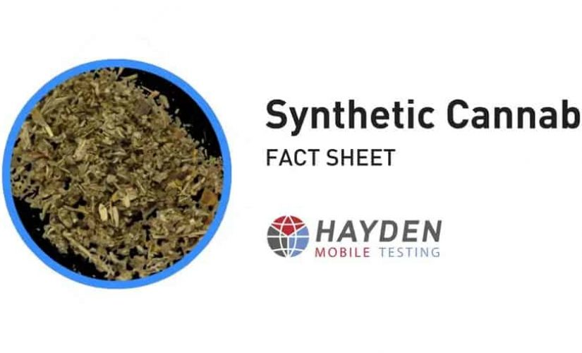 Synthetic Cannabis Fact Sheet - Workplace Testing Service - Hayden Health & Safety